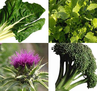 La acelga, los grelos, el cardo y el brócoli son fuentes vegetales de calcio