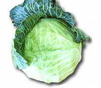 Col rizada, alimento vegetal rico en calcio