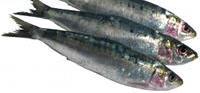 Las sardinas, alimento con calcio
